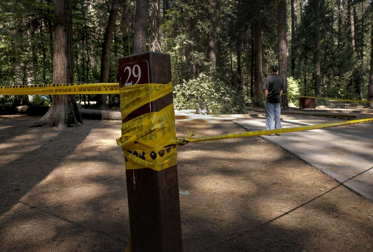 A National Park Service investigator, (declined to give name) looks over the accident site, at the Upper Pines campground in Yosemite National Park, Calif., on Sat. August 15, 2015, a day after an oak tree branch fell onto a tent with two children sleeping inside killing them.