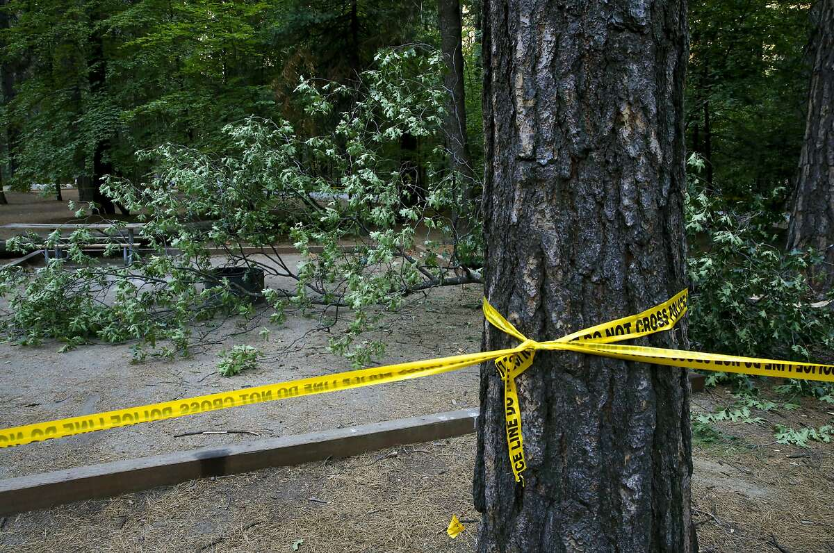 The site of the accident at the Upper Pines campground in Yosemite National Park, Calif., on Sat. August 15, 2015, a day after an oak tree branch fell onto a tent with two children sleeping inside killing them.
