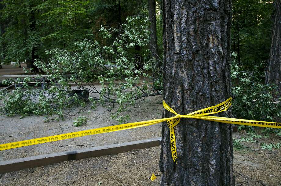 The site of the accident at the Upper Pines campground in Yosemite National Park, Calif., on Sat. August 15,  2015, a day after an oak tree branch fell onto a tent with two children sleeping inside killing them. Photo: Michael Macor, The Chronicle