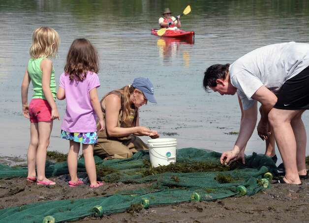 Five-year-olds Amelia Geurin, left, and Molly Quidort, both of Delmar, watch as Rebecca Houser,DEC  environmental science coordinator and Joel Osborne of Endicott collect out a fish netted during the fourth annual Great Hudson River Estuary Fish Count at Peebles Island State Park Saturday, August 15, 2015 in Cohoes, NY.  (John Carl D'Annibale / Times Union) Photo: John Carl D'Annibale / 00032957A