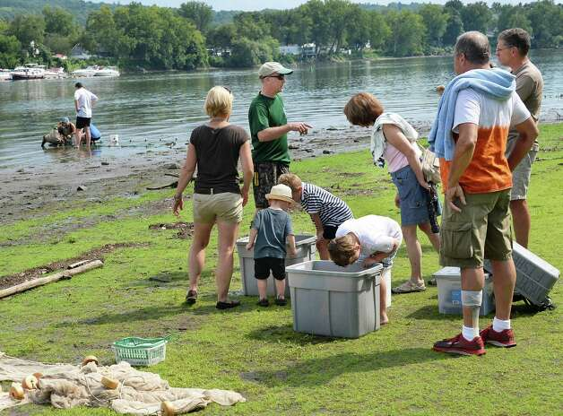 DEC aquatic biologist Scott Wells, center, explains about the fish, crabs and other river life during the fourth annual Great Hudson River Estuary Fish Count at Peebles Island State Park Saturday, August 15, 2015 in Cohoes, NY.  (John Carl D'Annibale / Times Union) Photo: John Carl D'Annibale / 00032957A