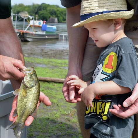 Two-year-old Samuel Quidort of Delmar gets a look at a smallmouth bass during the fourth annual Great Hudson River Estuary Fish Count at Peebles Island State Park Saturday, August 15, 2015 in Cohoes, NY.  (John Carl D'Annibale / Times Union) Photo: John Carl D'Annibale / 00032957A