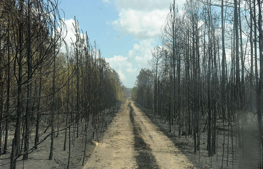 A wildfire left chared remains of a wooded section of Evadale near FM 1131 over the Memorial Day weekend. Several homes are near the area, but none were damaged as of press time Monday night. Guiseppe Barranco/The Enterprise