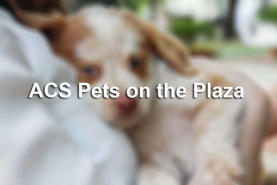 Animal Care Services held its first Pets on the Plaza event this summer in downtown San Antonio. Click through the slideshow to see photos from the event.