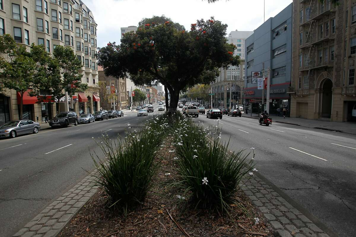 Some area residents oppose the cutting down of trees in the median and sidewalks along Van Ness Ave. to make way for the bus rapid transit project.