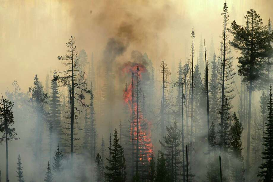 In this aerial photo, a wildfire consumes a tree in a burning forest near Omak, Wash., on  Thursday, Aug. 20, 2015. Firefighters on several fronts are fighting against raging wildfires advancing on towns in the north-central part of the state.  (Bettina Hansen/The Seattle Times via AP) SEATTLE OUT; USA TODAY OUT; MAGS OUT; TELEVISION OUT; NO SALES; MANDATORY CREDIT TO BOTH THE SEATTLE TIMES AND THE PHOTOGRAPHER Photo: Bettina Hansen, MBO / The Seattle Times