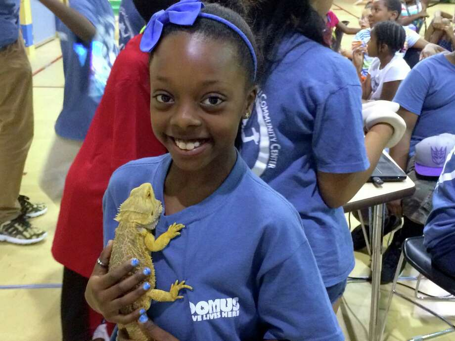 Students from the the Chester Addison Community Center's Reptile Club got hands-on science learning with snakes, lizards and other creatures on Aug. 6. Photo: Contributed / Contributed / Stamford Advocate Contributed