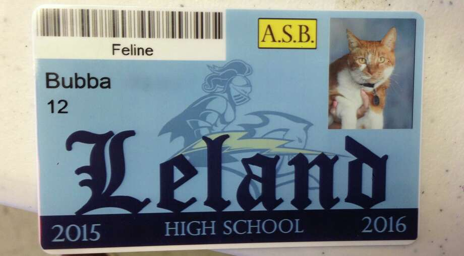 Bubba the Cat is a beloved mascot at Leland High School in San Jose, so much so that he got his own ID card. Photo: Amber Marienthal, Courtesy
