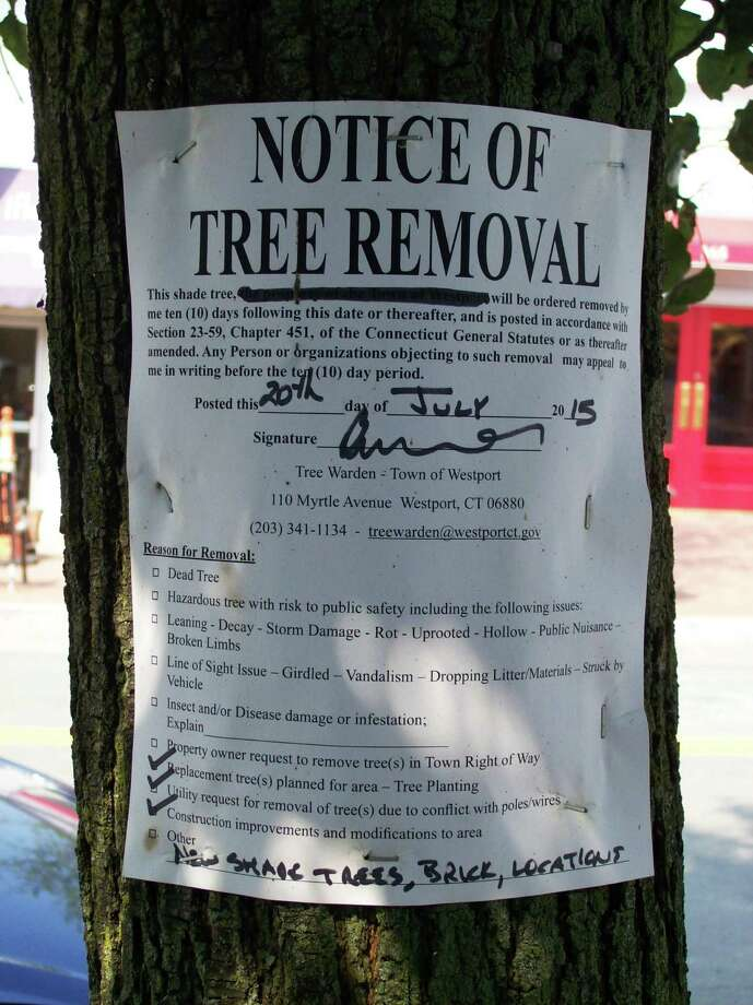 Notice posted on pear trees on Main Street that are being removed as part of a downtown improvement project that includes installing new brick sidewalks. Photo: Anne M. Amato / Hearst Connecticut Media / Westport News