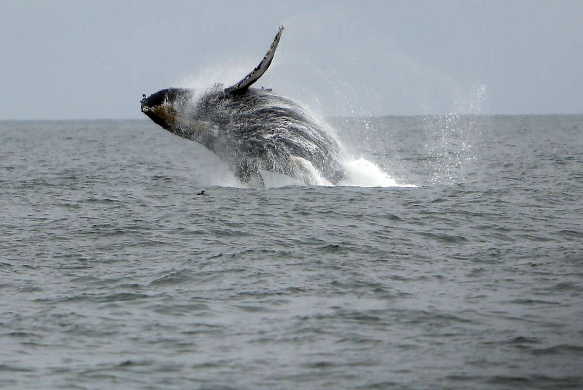 Humpback whales Best time to see them: May - November