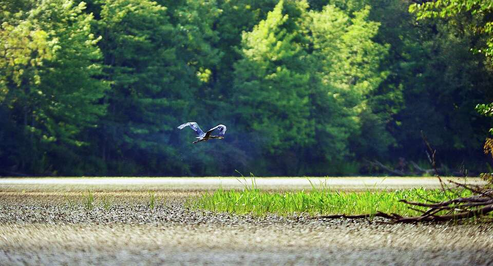 A great blue heron flies over the Mohawk River on Monday, Aug. 24, 2015, in Clifton Park, N.Y.   (Pa