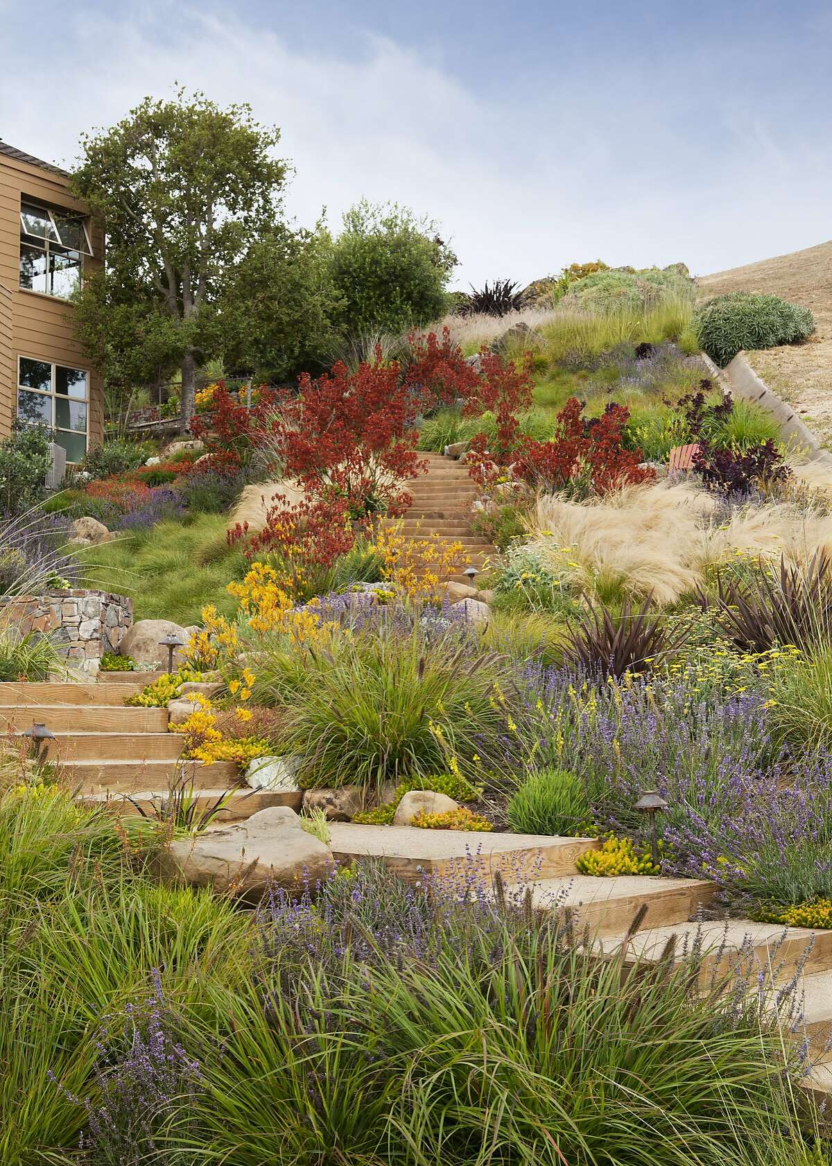 The grass swale weaves through the masses of plantings and diverts water away from the house. Storm water is then slowed by the Carex and allows more water to percolate into the soil and reduce impact on storm sewer system. Credit: Michele Le Willson Photography