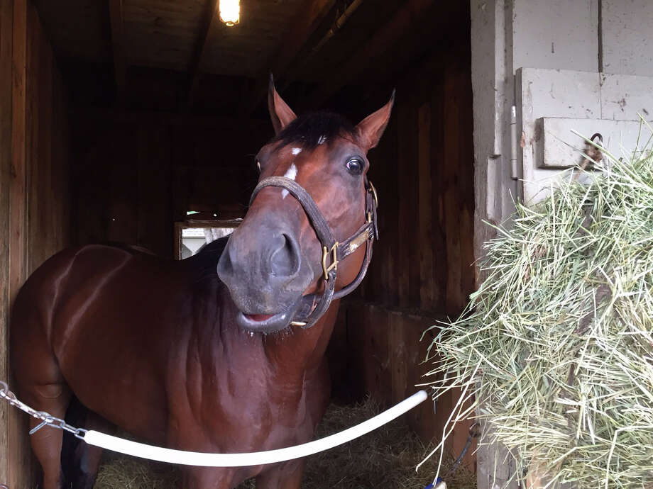 We all know who the showstopper in Saturday's Travers is. Triple Crown winner American Pharoah rolls into town Wednesday and is expected to roll over the rest of the field in the Midsummer Derby. Don't say that too loudly around some of the other horses that are going to try to pull off one of the greatest upsets ever. I might have said American Pharoah's name a little too loudly when I was over at Smart Transition's barn Monday morning. He snapped his head toward me and gave me a look like I should not say that name again around him. Gotcha.