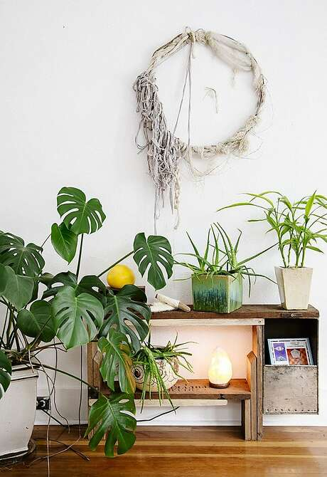 "Meet the split-leaf philodendron, the next ""It"" plant, according to Justina Blakeney, author of ""The New Bohemians. Photo: Dabito"