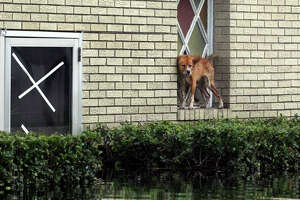What happened next for the Katrina pets? - Photo