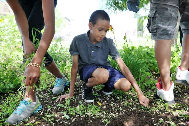 Traevon Vautrin, 9, helps older kids pull weeds in Freedom Square, one of the lots owned by the Sanctuary for Independent Media, on Thursday, July 23, 2015, in Troy, N.Y.  Vautrin lives in the neighborhood and comes out to help out in the gardens and flower beds.   (Paul Buckowski / Times Union) Photo: PAUL BUCKOWSKI / 00032644A