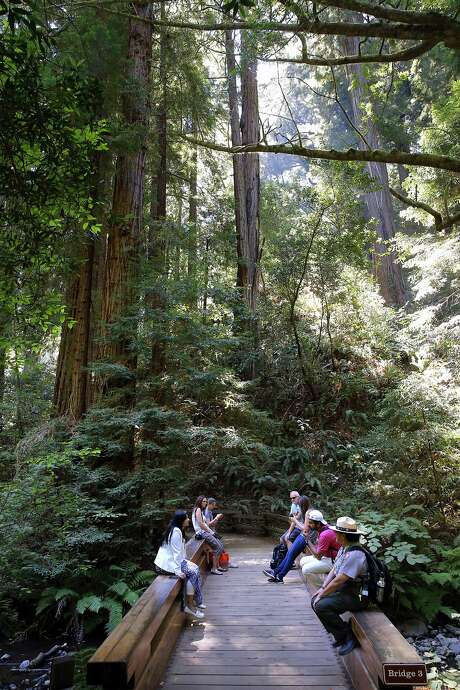 Visitors to the Muir Woods in Mill Valley, Calif., on Tues. August 25, 2015. A new Stanford study is helping researchers to better understand Lyme and tick-borne diseases in the Bay Area. Not only are tick-borne infections more common and complex than expected, but the risk is higher in redwood forests than previously believed. Photo: Michael Macor, The Chronicle