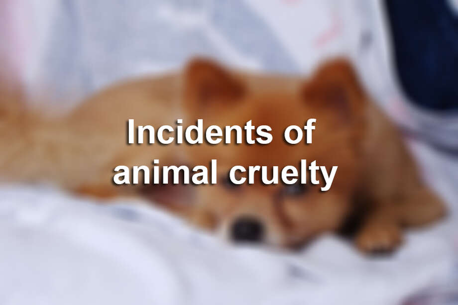 Animal cruelty incidents in the news.