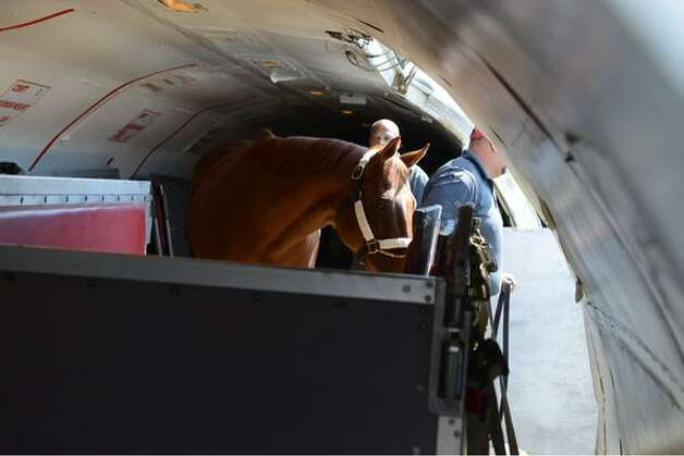 Funny Cide, the New York state-bred thoroughbred who the Kentucky Derby and Preakness Stakes 2003 arrived at Albany International Airport on Wednesday. He was on the plane with Triple Crown winner American Pharoah. Both are bound for Saratoga Race Course where Pharoah will run in Saturday's Travers Stakes. (Will Waldron / Times Union)