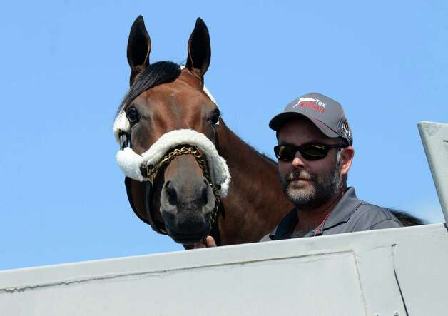 "Triple Crown winner and Travers hopeful, American Pharoah gets his first look at the Capital Region after landing at Albany International Airport Wednesday, Aug. 26, 2015, in Colonie, N.Y. He flew from California aboard a H. E. ""Tex"" Sutton Forwarding Company Boeing 727-200. (Will Waldron/Times Union) Photo: WW / 00033098A"