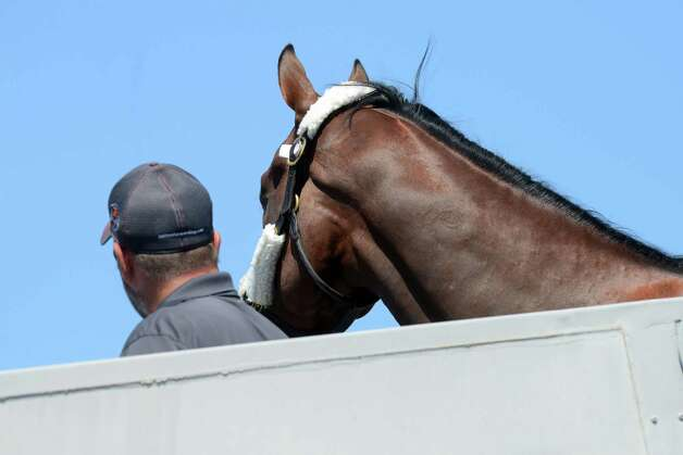 "Triple Crown winner and Travers hopeful, American Pharoah gets his first look at the Capital Region after landing at Albany International Airport Wednesday, Aug. 26, 2015, in Colonie, N.Y. He flew from California aboard a H. E. ""Tex"" Sutton Forwarding Company Boeing 727-200. (Will Waldron/Times Union)) Photo: WW / 00033098A"
