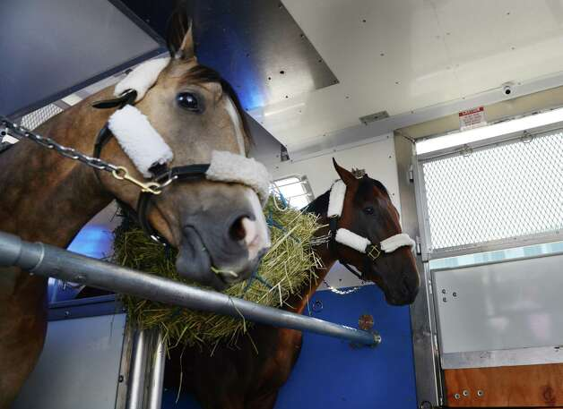 "Triple Crown winner and Travers hopeful American Pharoah, right, and stable companion Smokey, left, stand side-by-side in the horse trailer before departing for Saratoga after landing at Albany International Airport Wednesday, Aug. 26, 2015, in Colonie, N.Y. They flew out from California aboard a H. E. ""Tex"" Sutton Forwarding Company Boeing 727-200. (Will Waldron/Times Union) Photo: WW / 00033098A"