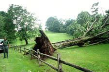 Onlookers check out the tree felled alongside the 4th green at Lake Waramaug Country Club in New Preston by a June 25, 2001 tornado.