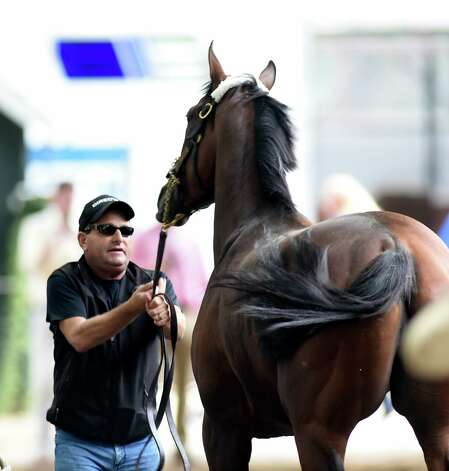 American Pharoah gets a little rambunctious with assistant trainer Jim Barnes upon his arrival at the Saratoga Race Course Wednesday afternoon Aug. 26, 2015 in Saratoga Springs, N.Y.       (Skip Dickstein/Times Union) Photo: SKIP DICKSTEIN