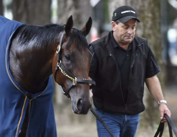Triple Crown winner American Pharoah cools off Thursday after his first workout at Saratoga Race Course. The thoroughbred arrived at the historic track on Wednesday and is expected to run in Saturday's Travers Stakes. (Skip Dickstein / Times Union)