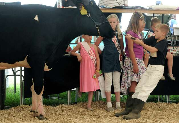 The Washington County Dairy Ambassador keeps an eye on the Guernsey cow competition during the Washington County Fair on Thursday Aug. 27, 2015 in Greenwich, N.Y. The fair runs through Sunday. (Michael P. Farrell/Times Union) Photo: Michael P. Farrell / 10032909A