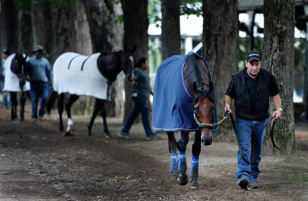 Triple Crown winner American Pharoah is cooled out after a morning gallop by assistant trainer Jim Barnes  Thursday morning Aug. 27, 2015 at the Saratoga Race Course in Saratoga Springs, N.Y.    (Skip Dickstein/Times Union) Photo: SKIP DICKSTEIN