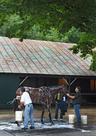 Triple Crown winner American Pharoah is given a bath by groom Eduardo Luna after a morning gallop Thursday morning Aug. 27, 2015 at the Saratoga Race Course in Saratoga Springs, N.Y.    (Skip Dickstein/Times Union) Photo: SKIP DICKSTEIN