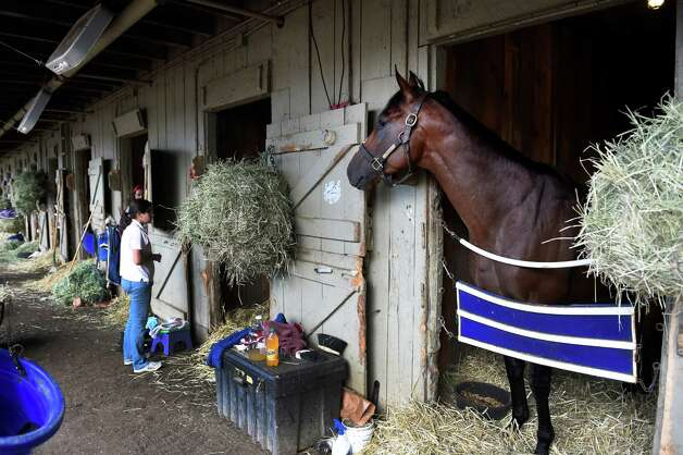 Smart Transition looks out of his stall in trainer John Shirreffs' barn Thursday morning Aug. 27, 2015, at Saratoga Race Course in Saratoga Springs, N.Y.  (Skip Dickstein/Times Union) Photo: SKIP DICKSTEIN