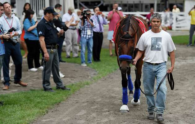 Triple Crown winner American Pharoah is given his first look at the paddock by groom Eduardo Luna Thursday morning Aug. 27, 2015 at the Saratoga Race Course in Saratoga Springs, N.Y.    (Skip Dickstein/Times Union) Photo: SKIP DICKSTEIN