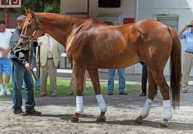 2003 Kentucky Derby and Preakness winner Funny Cide makes an appearance in the paddock the day before the New York Bred Showcase Day Thursday afternoon Aug. 27, 2015 at the Saratoga Race Course in Saratoga Springs, N.Y.    (Skip Dickstein/Times Union) Photo: SKIP DICKSTEIN