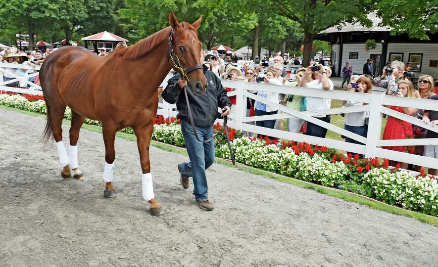 2003 Kentucky Derby and Preakness winner Funny Cide makes an appearance in the paddock the day befor