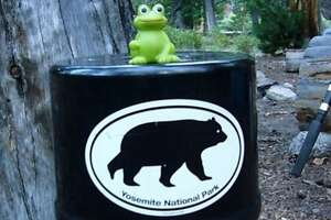 ?Bear-proof? boxes certainly not stopping bear bullies - Photo