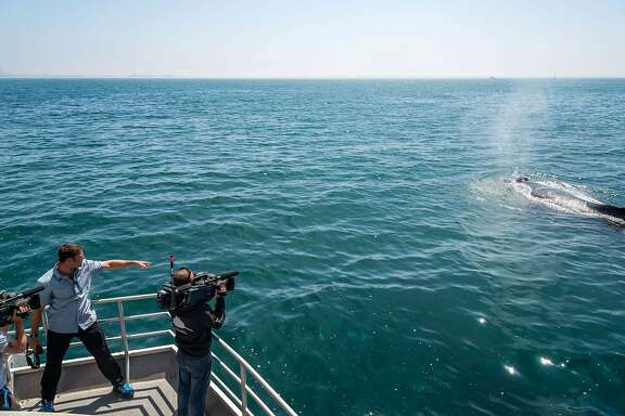 Programme Name: Big Blue Live - TX: 27/08/2015 - Episode: n/a (No. 2) - Picture Shows: A curious humpback whale approaches BBC Big Blue Live presenter, Steve Backshall while filming on the Fulmar, a research vessel of the National Oceanic and Atmospheric Administration (NOAA). Steve Backshall - (C) Monterey Bay Aquarium - Photographer: Tyson V Ringer