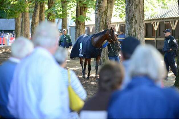 American Pharoah is cooled down after his morning workout Friday. (Will Waldron / Times Union)