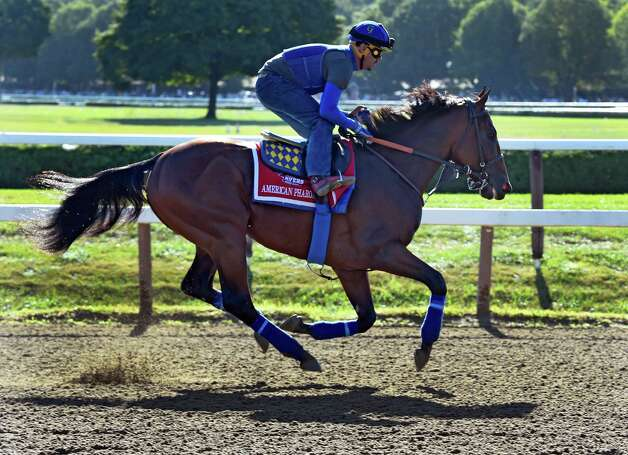Triple Crown winner American Pharoah with exercise rider Georgie Alvarez aboard gallops around the track Friday morning Aug. 28, 2015 at the Saratoga Race Course in Saratoga Springs, N.Y.  (Skip Dickstein/Times Union) Photo: SKIP DICKSTEIN