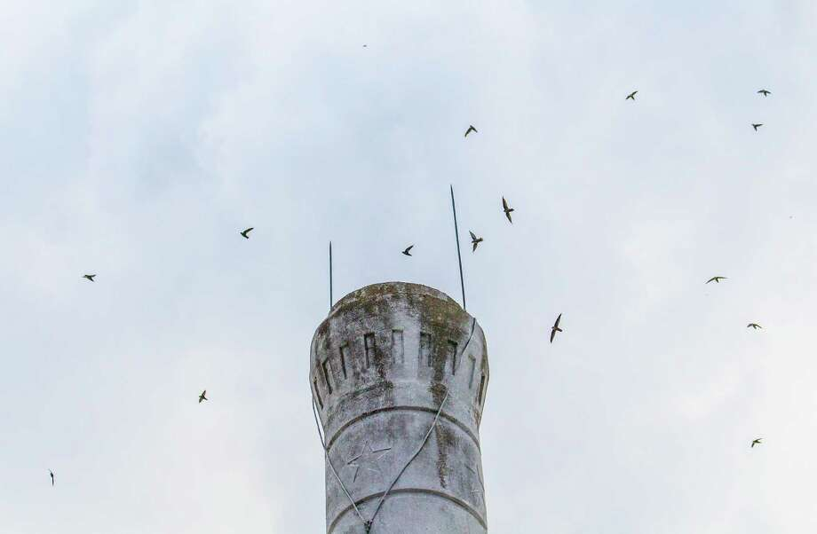 Chimney swifts are congregating en mass in advance of their migratory journey to South America. Photo: Kathy Adams Clark / Kathy Adams Clark/KAC Productions