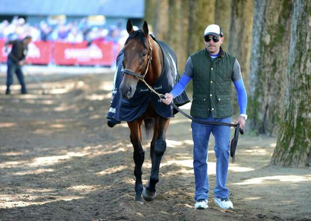 Triple Crown winner American Pharoah is given a cool down walk by exercise rider George Alvarez following a morning work out Friday, Aug. 28, 2015, at Saratoga Race Course in Saratoga Springs, N.Y. Pharoah will compete in Saturday's Travers Stakes. (Will Waldron/Times Union) Photo: WW / 00033155B