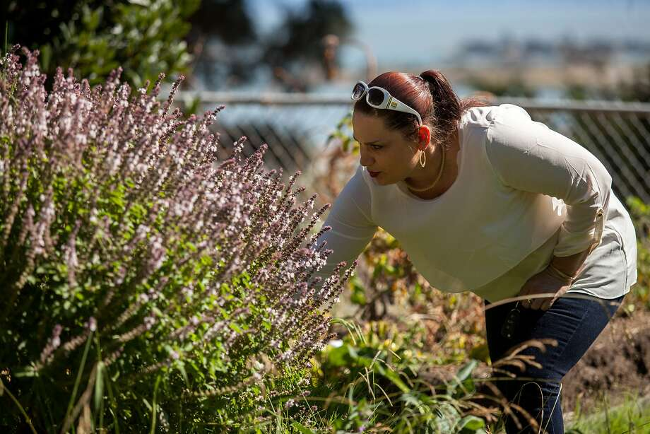Lena Miller, head of Hunters Point Family, checks out the community garden in the Bayview's Adam Rogers Park. Photo: Santiago Mejia, Special To The Chronicle