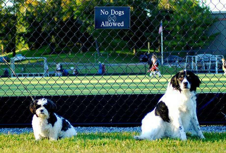Two dogs brought by members of the Skidmore College field hockey team watch the game under a sign that may have left them a little chagrined if they could read. Cathy Lindberg of Saratoga said the smaller dog is her daughter?s dog, Bonsai. The dogs always attend the games and cheer from afar, she says. (Cathy Lindberg)