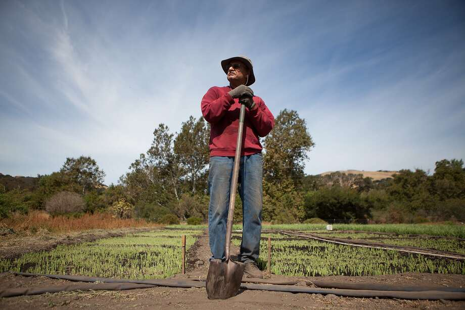 Majid Yousef stands in front of his parcel of land at the Sunol AgPark on Friday, Aug. 28, 2015 in Sunol, Calif.  For nine years, Sunol AgPark farmers have cultivated 18 acres of lush, fertile land under a partnership with the Public Utilities Commission, but that agreement could come to an end if the PUC turns a portion of that farmland into a parking lot. Photo: Nathaniel Y. Downes, The Chronicle