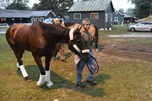 Photos: American Pharoah, Smokey head back to California - Photo