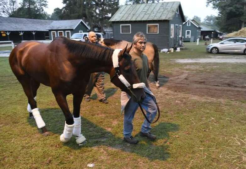 Triple Crown winner American Pharoah heads to the trailer for the start of his trip back to Californ