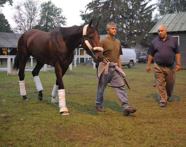 Triple Crown winner American Pharoah heads to the trailer for the start of his trip back to California. The thoroughbred spent an eventful week at Saratoga Race Course, drawing 15,000 people to the track for a Friday workout before coming in second in Saturday's Travers Stakes. (Skip Dickstein / Times Union)
