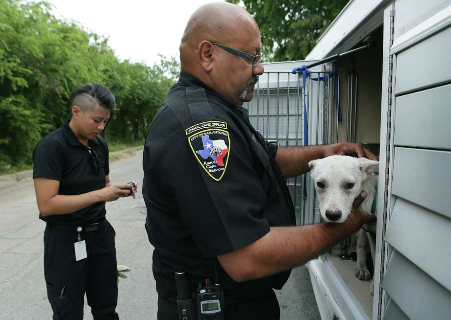 Animal Care Services Officer Mike Solis placed a stray dog in his truck during a block walk on the West Side to educate residents about animal care. At left is Officer Bernadette Obregon. Photo: Bob Owen /San Antonio Express-News / San Antonio Express-News