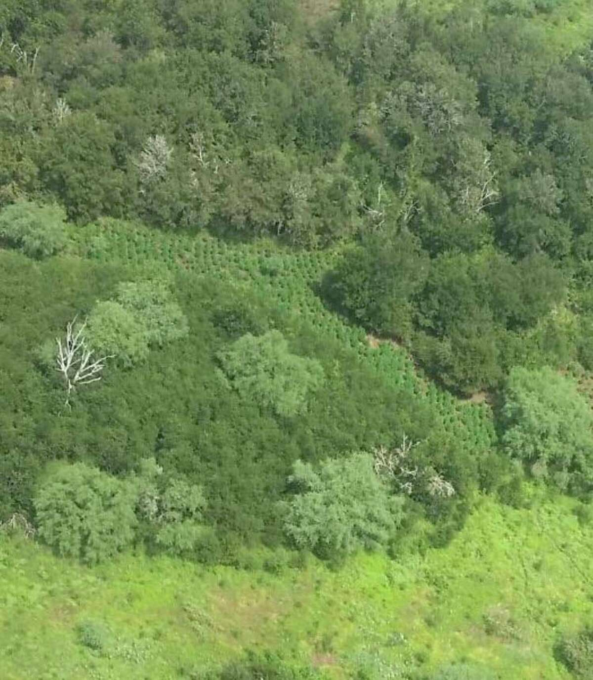 DEA and Austin County officials found and destroyed 8,653 marijuana plants and other items after a DEA helicopter discovered a pot farm Aug. 26 in Austin County.